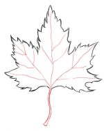 Рисунок с листьями – Как нарисовать листья карандашом: 5 вариантов