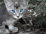 Кошачьи глаза фото – Завораживающие кошачьи глаза (26 Фото)